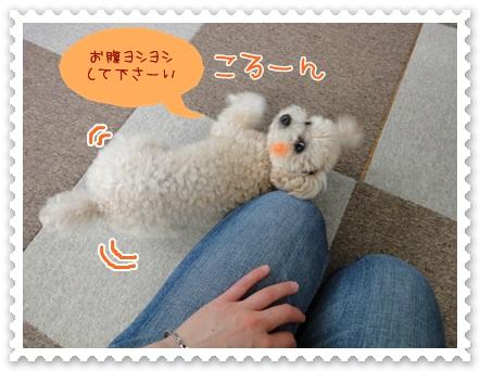 b12_20120526140525.jpg