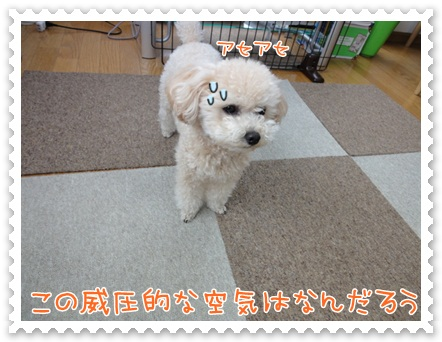 b22_20120526141020.jpg