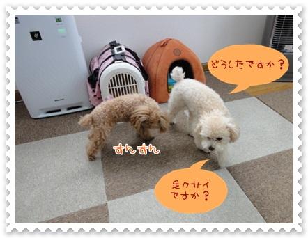 b5_20120526134724.jpg