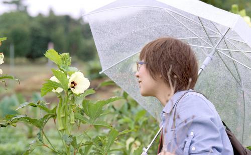 オクラの花と