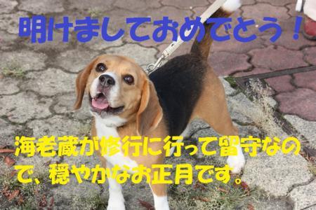 012_20130101121706.jpg