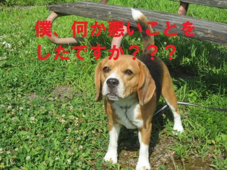 017_20120812165557.jpg