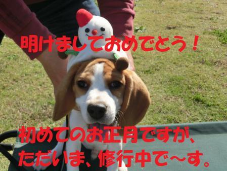427_20130101121710.jpg