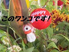 IMG_0055_20120611055244.jpg