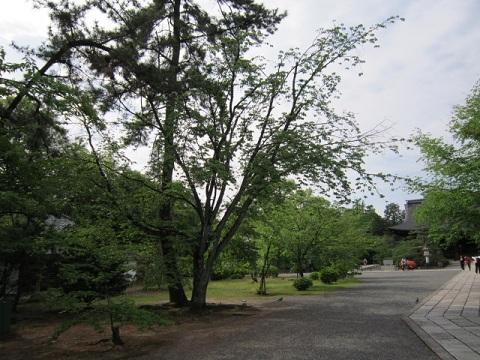 51-11.jpg