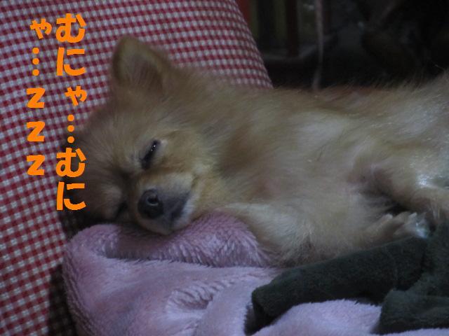 IMG_4734a.jpg