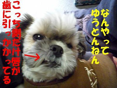 P1080674_20121122175629.jpg