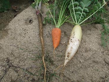 根野菜3兄弟