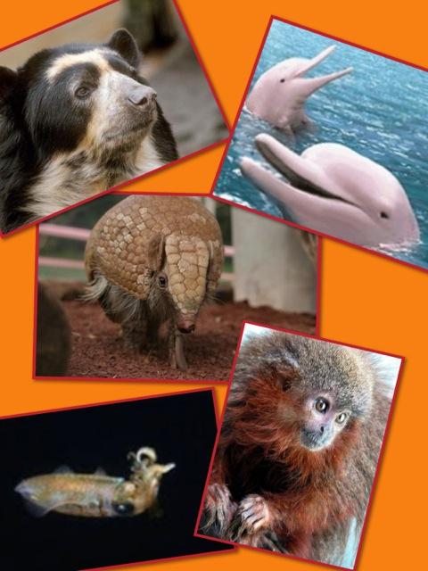 土曜ひろば12 動物