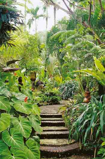 Backyard landscape ideas with a pool home ideas and designs for Tropical pool landscaping plants