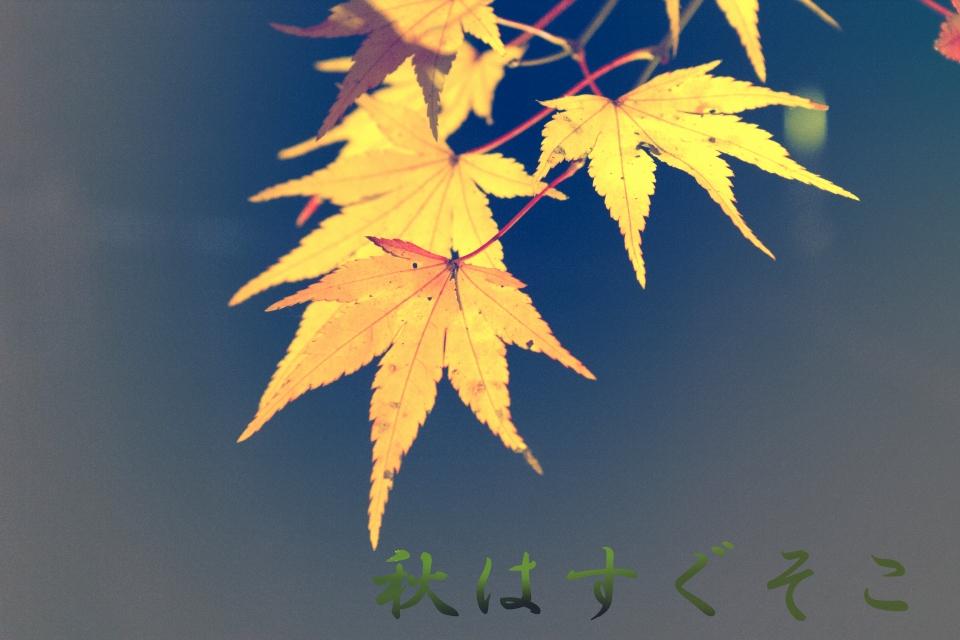 紅葉オンリ-