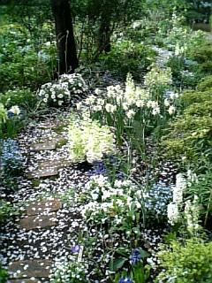 petals path