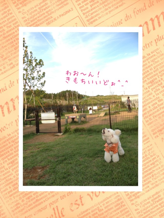 image_20120926213427.jpg