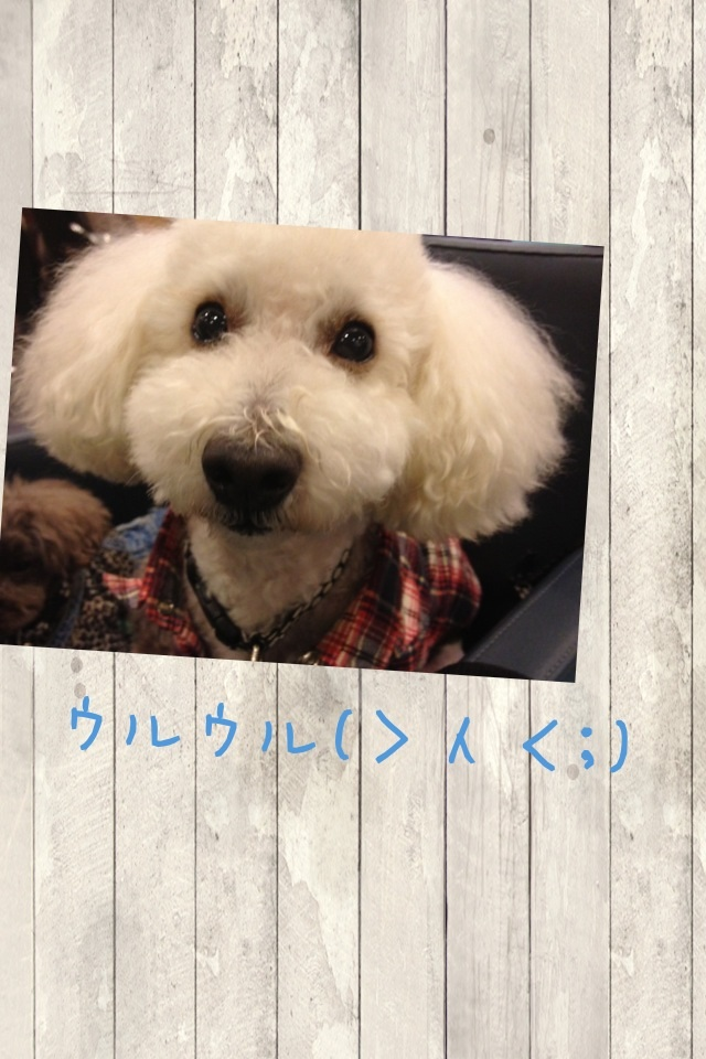 image_20121102123741.jpg