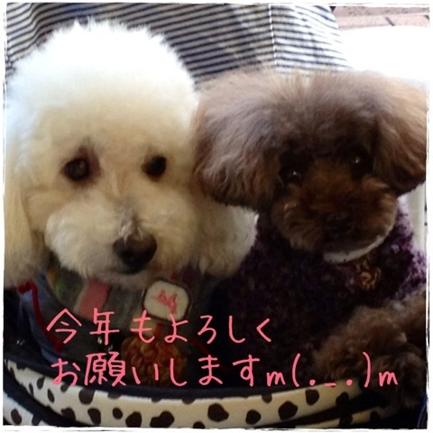 image_20130105210651.jpg