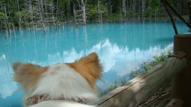 レオと青い池