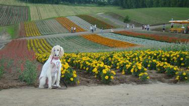 お花畑と蘭