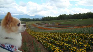 お花畑とレオ