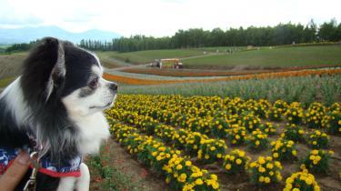 お花畑とモエ