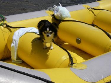 ひとりでボートに戻ってみた