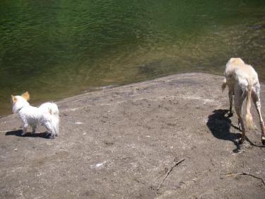 蘭 「レオ兄ちゃん、一緒に泳ぐ?」