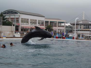 でかクジラ