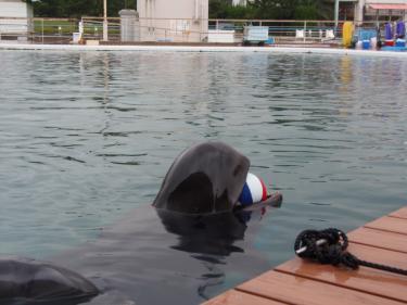 クジラ女子