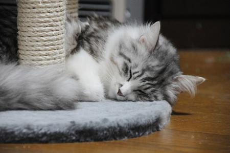 気持よく眠れるニャ