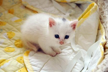赤ちゃんミミ
