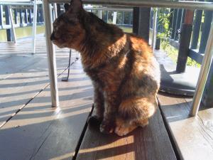 小空カフェ 猫