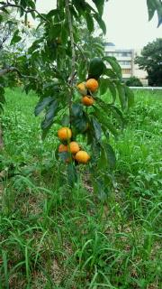 農園20121002_2