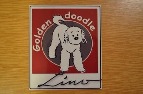 ゴールデンドゥードル  Lino