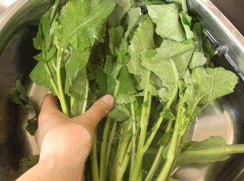 かき菜50℃洗い
