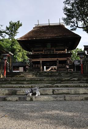 青井阿蘇神社の蓮を