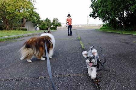 記念日のお散歩2