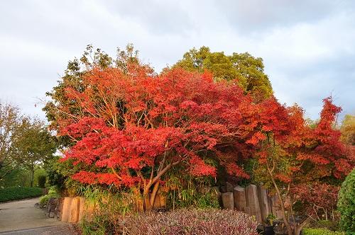 竹林園2012モミジ