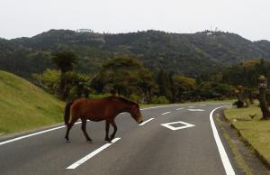 馬道路横断