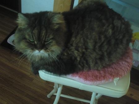 チャチャの好きな椅子 (1)