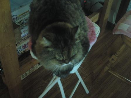 チャチャの好きな椅子