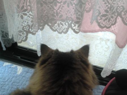窓の向こうは (4)
