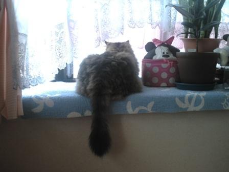 窓の向こうは (1)