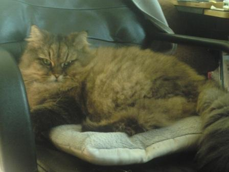 チャチャの椅子 (2)