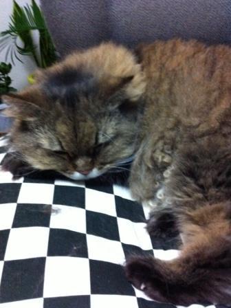 寝顔のチャチャ (1)