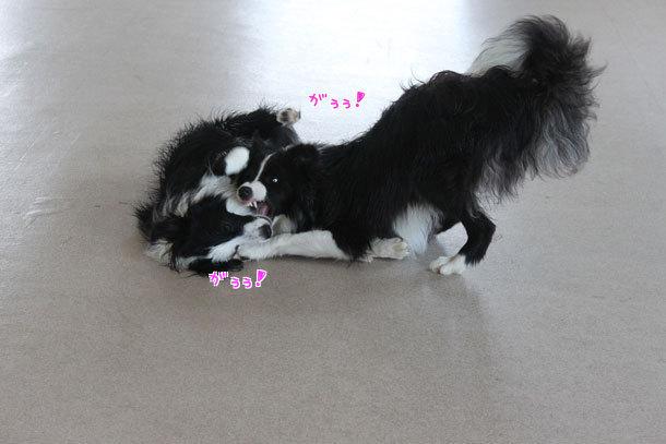 ナナちゃん&シルバちゃん