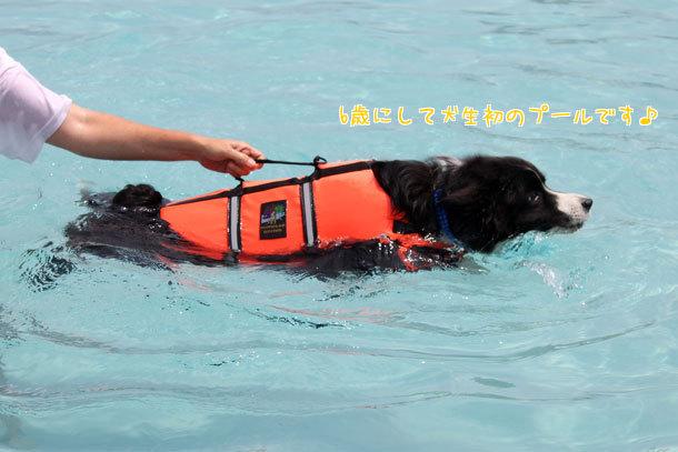 ゼロくん泳ぐ