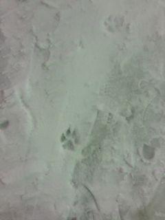 大雪 足跡