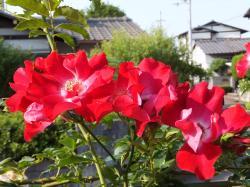2012_0527_161726-DSCF1354_convert_20120527165053.jpg