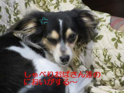 IMG_0397a.jpg