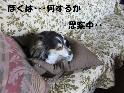 IMG_0419a.jpg