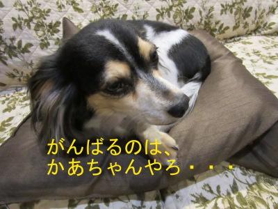 IMG_0511abc.jpg